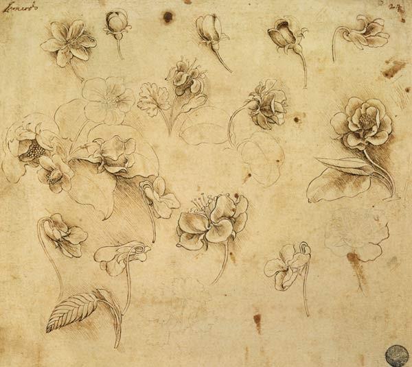 I Fiori Visti In Arte E Attraverso La Tecnica Del Disegno