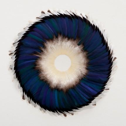 kate mccgwire,arte,opere d'arte fatte con piume,scultura,arte contemporanea