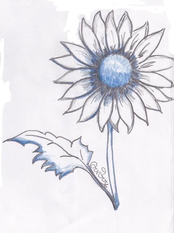 I fiori visti in arte e attraverso la tecnica del disegno for Fiori da disegnare facili